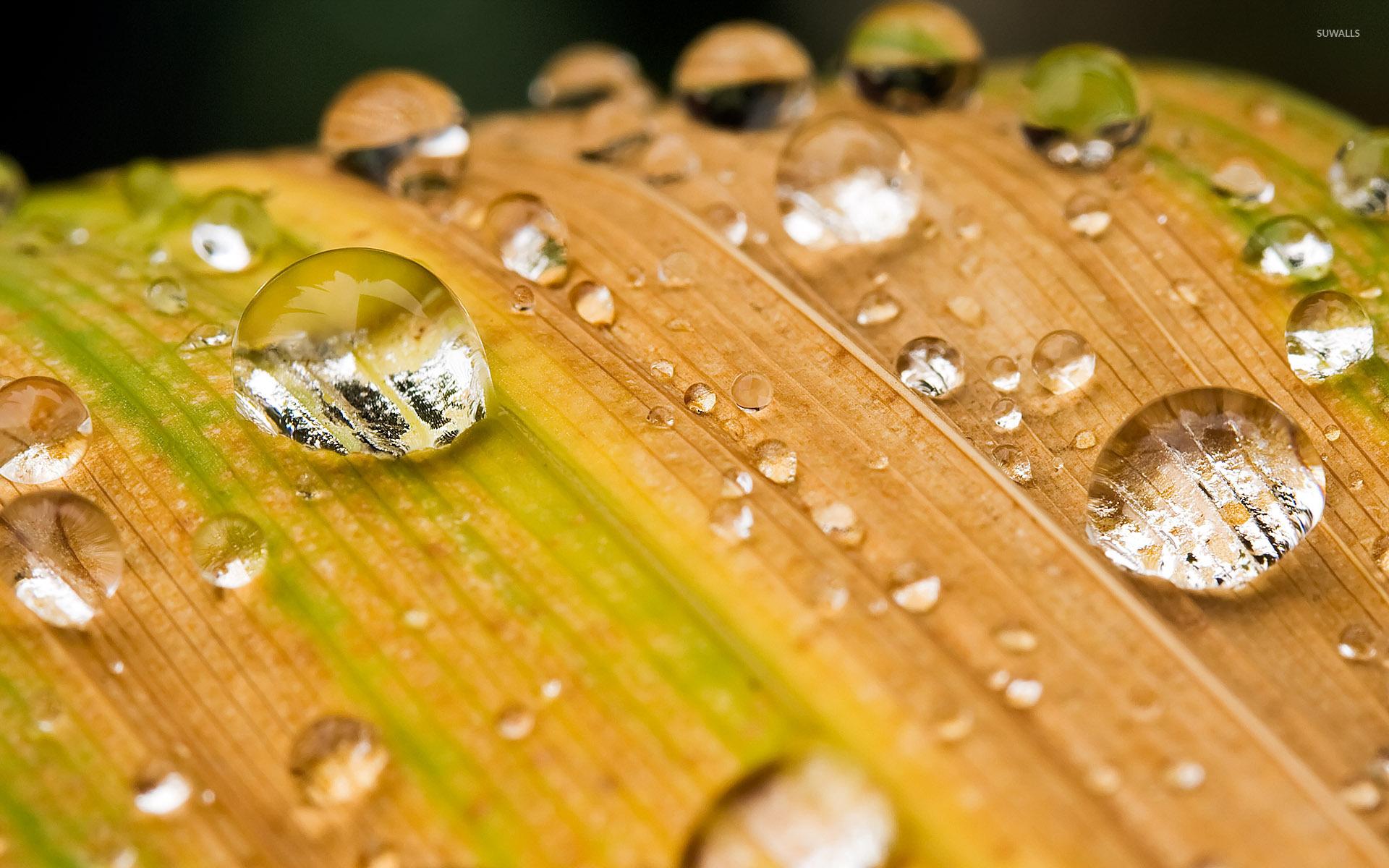 Water Drops On A Leaf Wallpaper