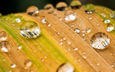 Water drops on a leaf Wallpaper