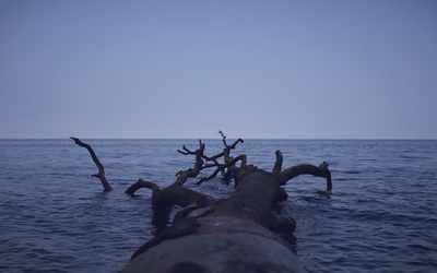 Tree trunk floating in the ocean wallpaper