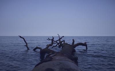 Tree trunk floating in the ocean Wallpaper