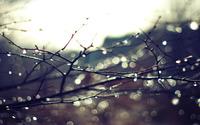 Wet branches wallpaper 1920x1200 jpg