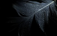 Wet feather wallpaper 1920x1200 jpg