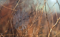 Wet spider web wallpaper 1920x1200 jpg