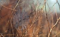 Wet spider web wallpaper 1920x1200 jpg