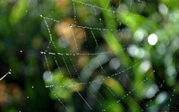 Wet spiderweb wallpaper 2560x1600 jpg