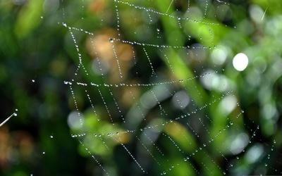 Wet spiderweb wallpaper