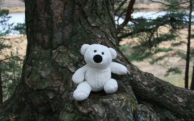 White teddy bear on a tree wallpaper