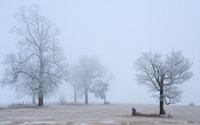 Winter morning fog wallpaper 1920x1080 jpg