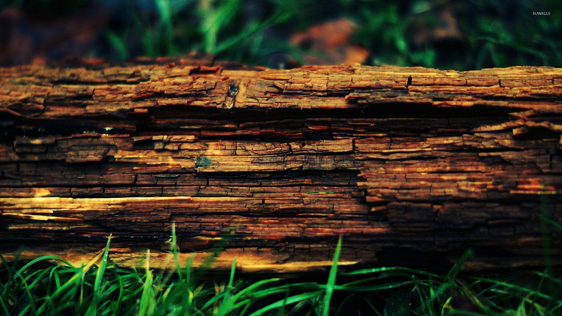 Wood bark wallpaper