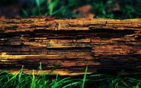 Wood bark wallpaper 1920x1080 jpg