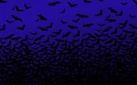 Bats wallpaper 1920x1200 jpg