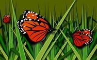 Butterflies [9] wallpaper 1920x1200 jpg