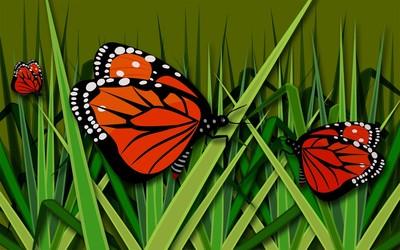 Butterflies [9] wallpaper