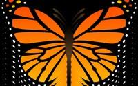 Butterfly [33] wallpaper 2880x1800 jpg