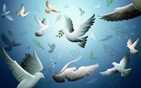 Doves wallpaper 1920x1200 jpg