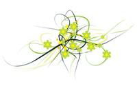 Flowers [17] wallpaper 2560x1600 jpg