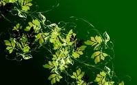 Green butterflies wallpaper 2560x1600 jpg