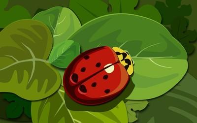 Ladybug [8] wallpaper