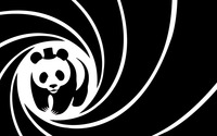 Panda wallpaper 1920x1080 jpg