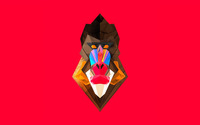 Polygon baboon wallpaper 2560x1600 jpg