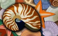 Seashells wallpaper 1920x1200 jpg