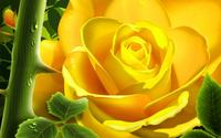Yellow Rose wallpaper 1920x1200 jpg