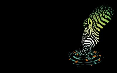 Zebra drinking wallpaper