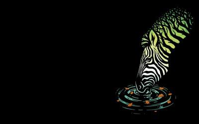Zebra drinking Wallpaper