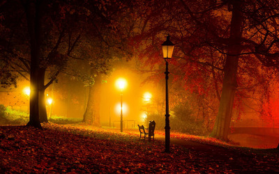 Amazing colors in the autumn park wallpaper