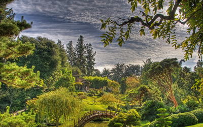 Beauty in a japanese garden on an amazing summer day wallpaper