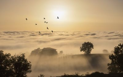 Birds flying above the foggy hills into the sun light wallpaper