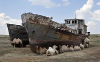 Camels by abandoned ships wallpaper 2880x1800 jpg