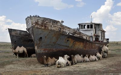 Camels by abandoned ships wallpaper