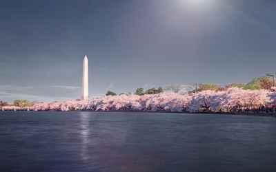 Cherry blossoms near Washington Monument wallpaper