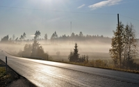 Foggy forest by the road wallpaper 2560x1600 jpg