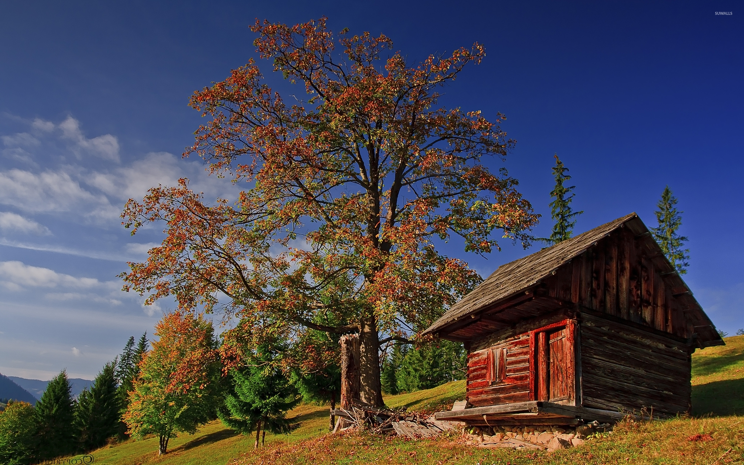 Old small wooden house under an autumn tree wallpaper for Tree wallpaper for home