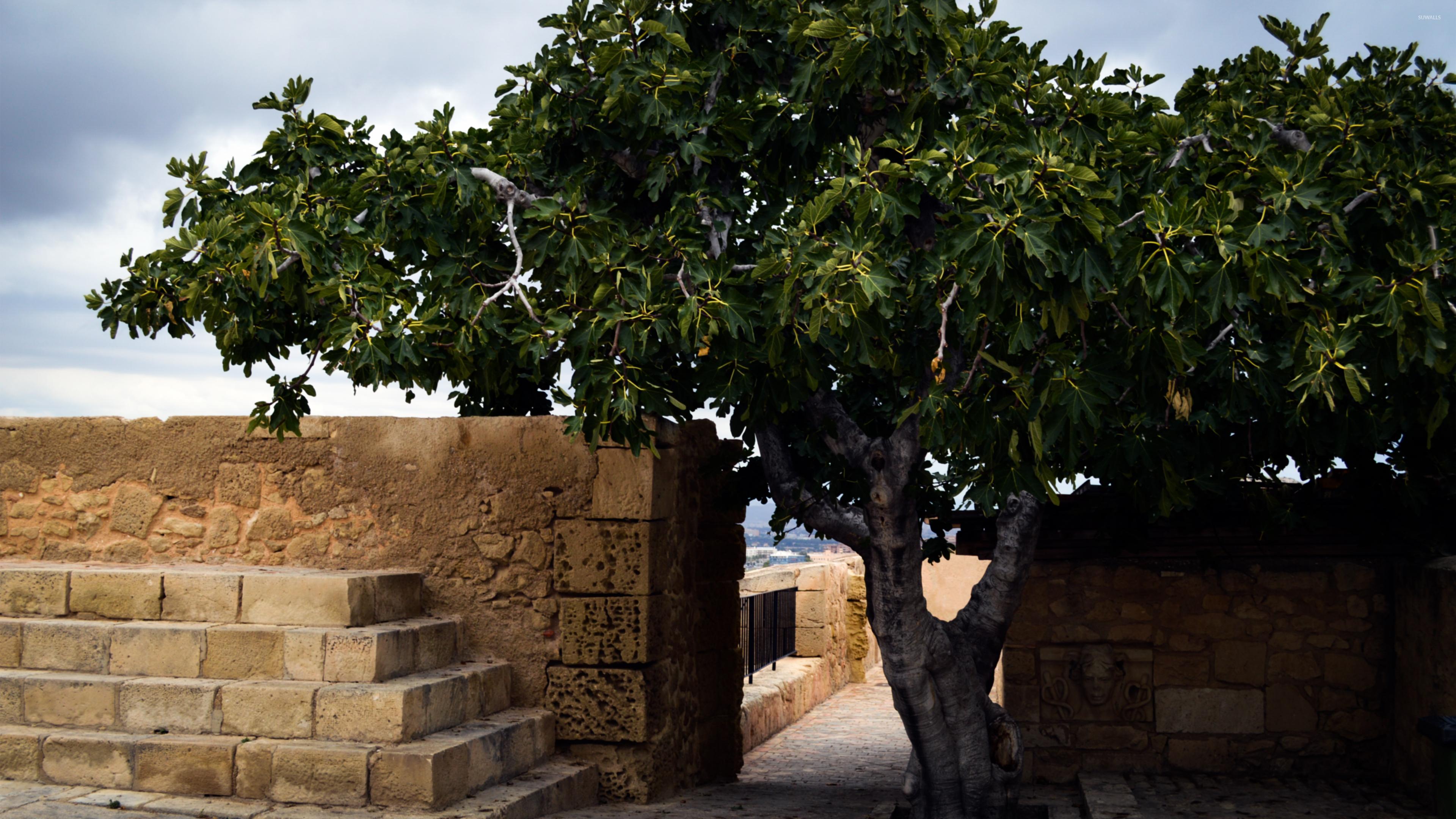 Santa Bárbara Castle courtyard wallpaper