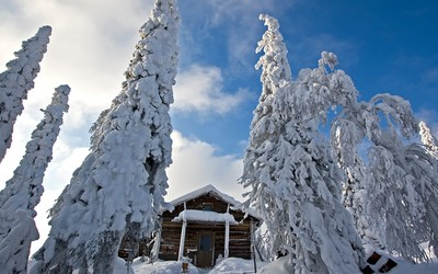 Snowy trees guarding the snowy wooden hut wallpaper