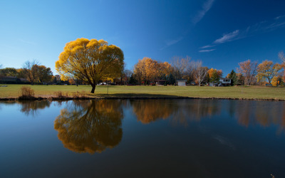 Sunny day over the autumn trees wallpaper