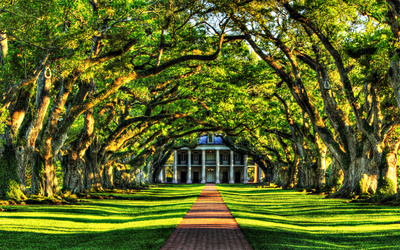 Tree tunnel to the mansion wallpaper