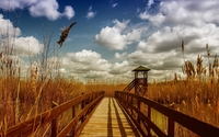 Wooden bridge across the river towards the reed wallpaper 2560x1600 jpg
