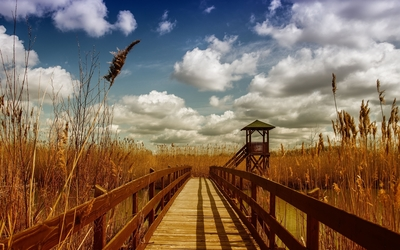 Wooden bridge across the river towards the reed wallpaper